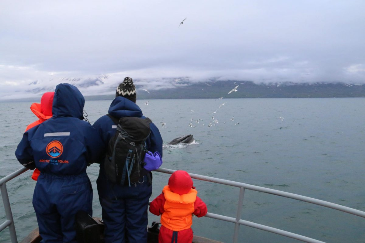 Whale-Watching-Dalvik-North-Iceland