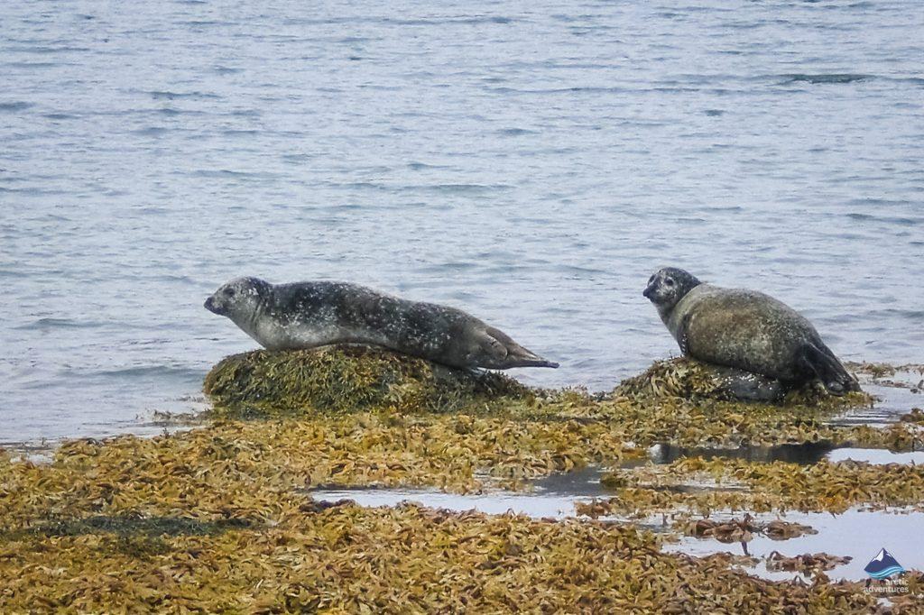 Seakayaking-with-seals