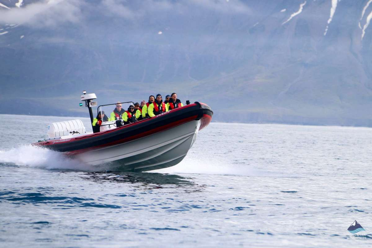whale-watching-north-iceland